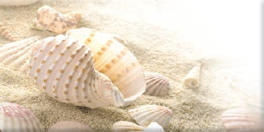 Decor Seashell Beige 1