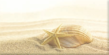Decor Seashell Beige 2