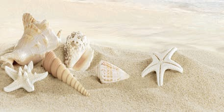 Decor Seashell Beige 3