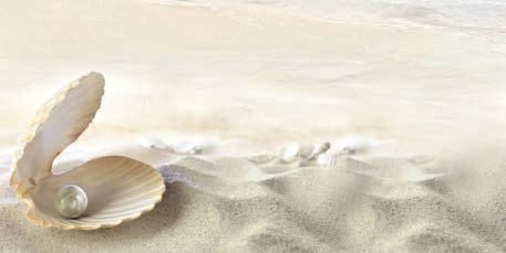 Decor Seashell Beige 4